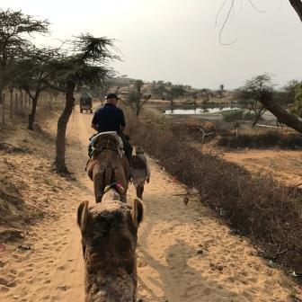 Camel Ride Pushkar India