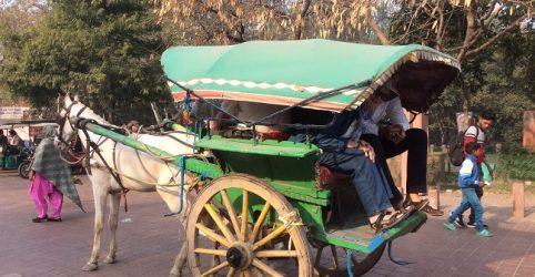 Horse Cart, Taj Mahal